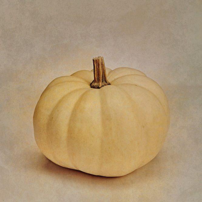 Luca Brogi Photographer – Pumpkin