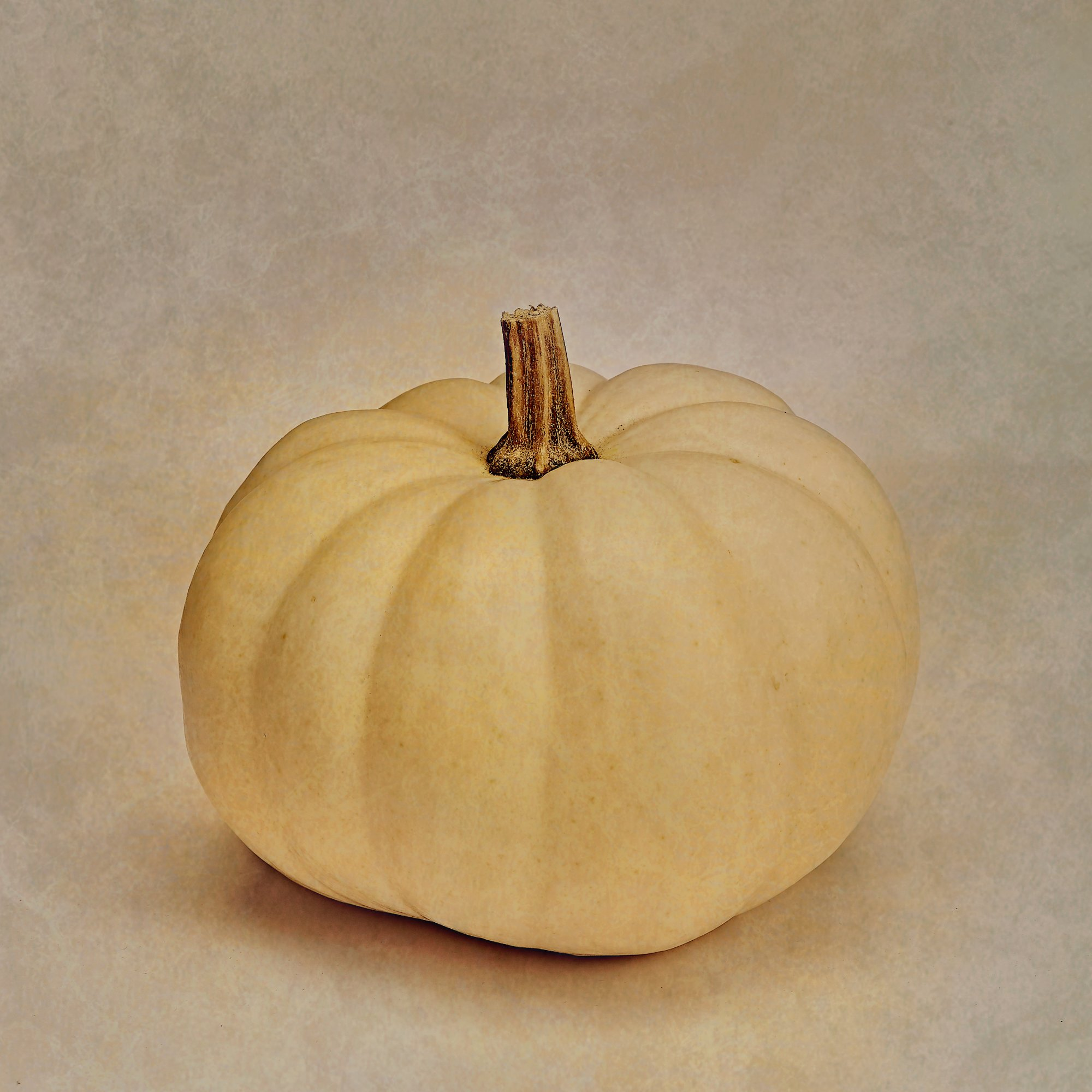 Luca Brogi Photographer – Pumpkin