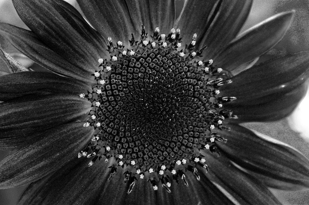 Luca Brogi Photographer – Monochrome