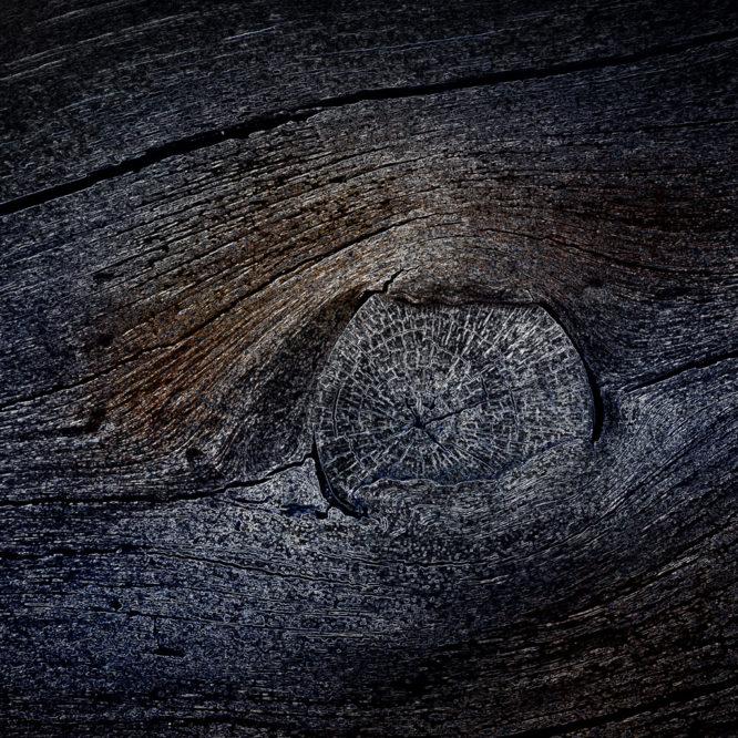Marine wood – Luca Brogi Photography