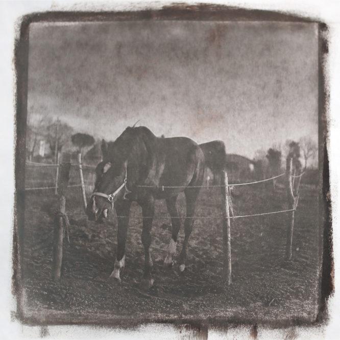 Horse – Van Dyke Print- Luca Brogi Photography